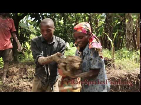 Building a Home for the Pygmies - Rare Species Fund | Uganda | Myrtle Beach Safari