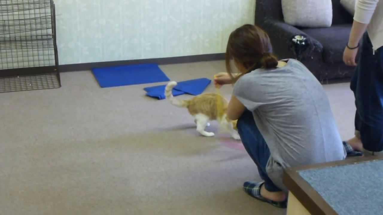 キャッチー – 猫カフェまとめサイト