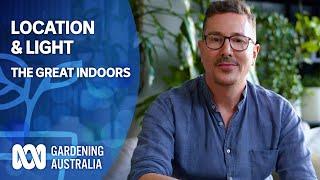 Location & Light   Indoor Plants And Balcony Gardens   Gardening Australia