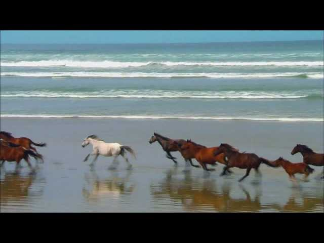 Wildlife Windows 7 Sample Video