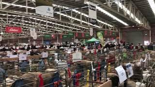 Australian wool and Sheep Show BENDIGO 2018