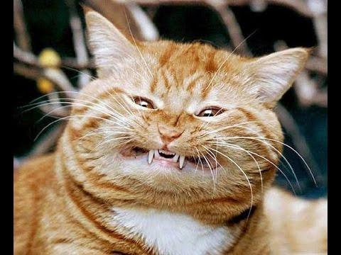 Приколы с кошками. Прикольные кошки. Смешные животные ...