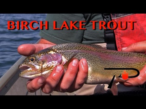 Alberta's Birch Lake Trout