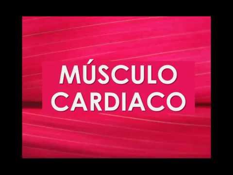 Histología del músculo cardiaco ♥ - YouTube