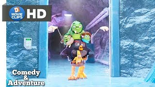 The Angry Birds Movie 2 Hindi Dance Off! Comedy & Adventure Scene MovieClips