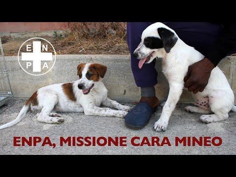 MISSIONE CARA MINEO - ENPA - Sterilizzazione dei cani randagi