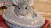 . «четыре лапы» осуществляет продажу товаров для животных в интернете. В нашем магазине вы можете купить зоотовары с доставкой по москве.