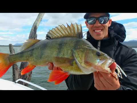 IFISH - Ballarat Redfin