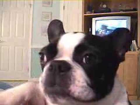 dog music video.