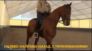 Кизимов М.И. видео семинар Часть 1