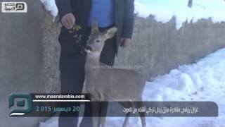 مصر العربية | غزال يرفض مغادرة منزل رجل تركي أنقذه من الموت