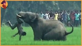 15 Unbelievable Elephant Attacks & Interactions Caught On Camera!
