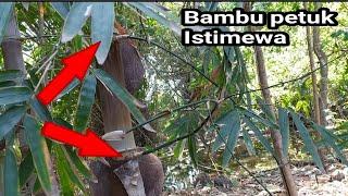 Bambu petuk sangat istimewa