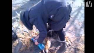 Во Владивостоке убивают беззащитных животных