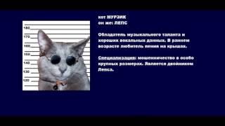 Смешное видео, смешные коты, смотреть в полном экране