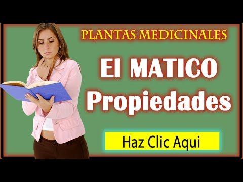 Matico propiedades curativas y medicinales usos del for Planta decorativa con propiedades medicinales