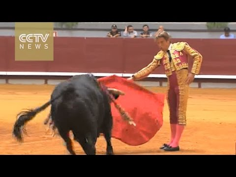 Spain's traditional bullfighting sparks controversy