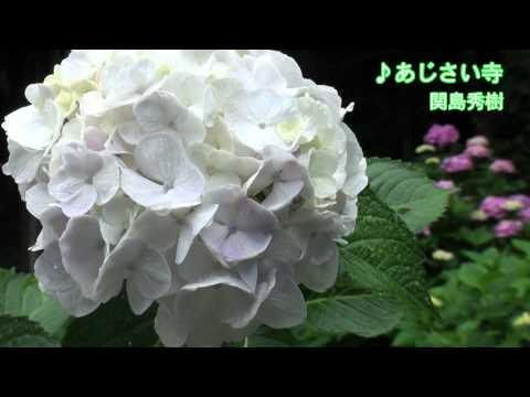 筑後路散歩 〜♪あじさい寺〜 関島秀樹
