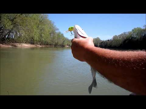 How To Catch White Bass In River