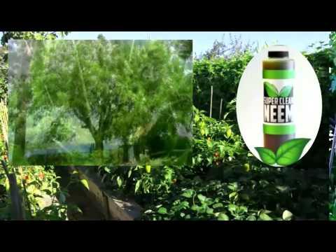 Organic Pest Control | Neem Oil | Dr. Bronner's Sal Suds