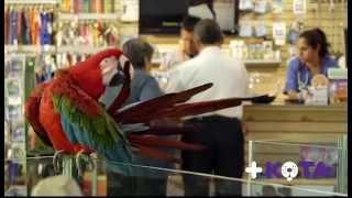 Cuidados de las mascotas: Cuidados +KOTA para el bienestar de las aves.