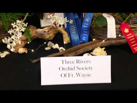 The Greater Cleveland Orchid Society Show Tables/Display 2016