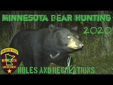 Minnesota Bear Hunting Regulations 2020