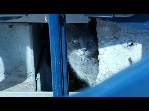Cat lies underneath the PNC Park stands