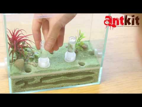 Setting Up AntKit Ytong Nest with Glass Arena Ant Farm