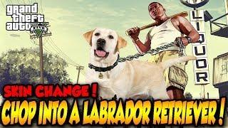 Gta 5 Turn Chop Into A Labrador Retriever! Gta V Skin Change Mod! (gta 5 Mods)