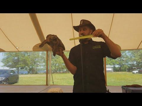 Alligator Snapping Turtle Biting Celery in Half Demo