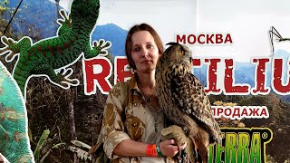 Reptilium - Day 1. Trade fair featuring terrarium animals and an eagle owl named Yoll.