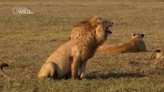Смешное видео про Львов