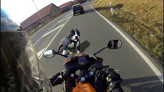 Angry Dogs vs BIKERS & DOGS ATTACKED MOTORCYCLE [Ep #03] 🌟 BEST Compilation 2017