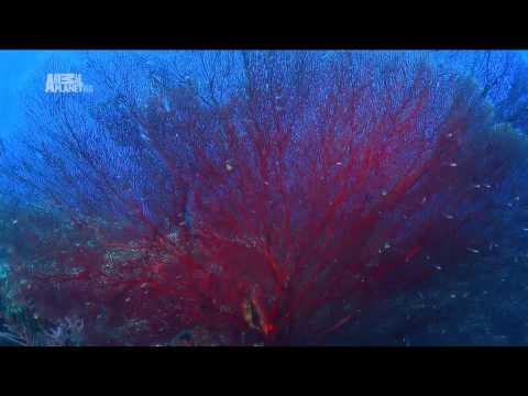 Австралия и Океания - Видео онлайн