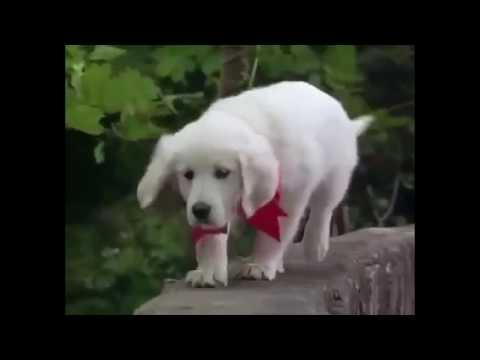 Peliculas de Perros - Napoleón
