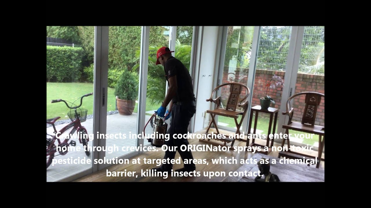Odourless Residual Spraying For Flies, Cockroaches & Ants by ORIGIN Exterminators