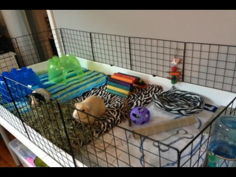 Guinea pig cage tour 2x4 c c cage youtube for Making a c c cage