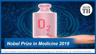 Nobel Prize in Medicine 2019: For discovering how cells sense and adapt to oxygen levels
