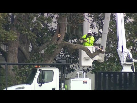 Historic White House Magnolia Tree Has Been Cut Back Youtube