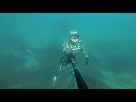 Free Diving Douglas Harbour