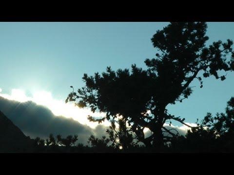 Saving Waterton's Whitebark Pines