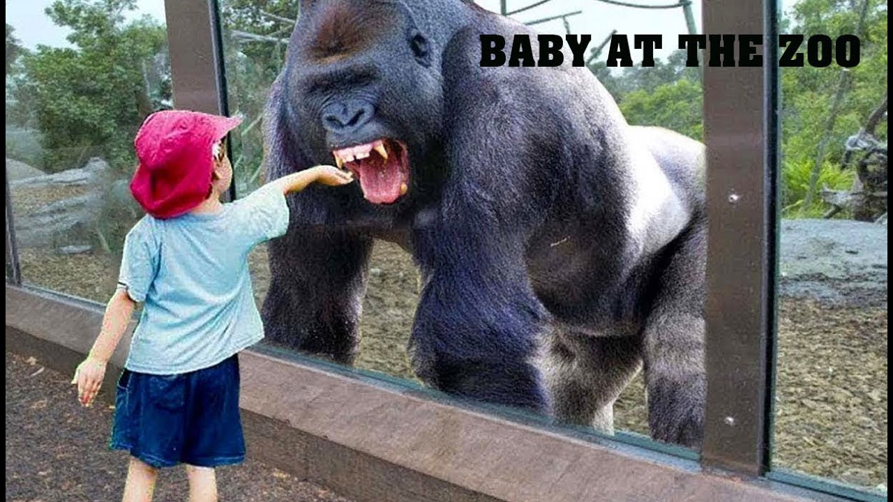 TRY NOT TO LAUGH | Funny Babies At The Zoo  - LAUGH TRIGGER