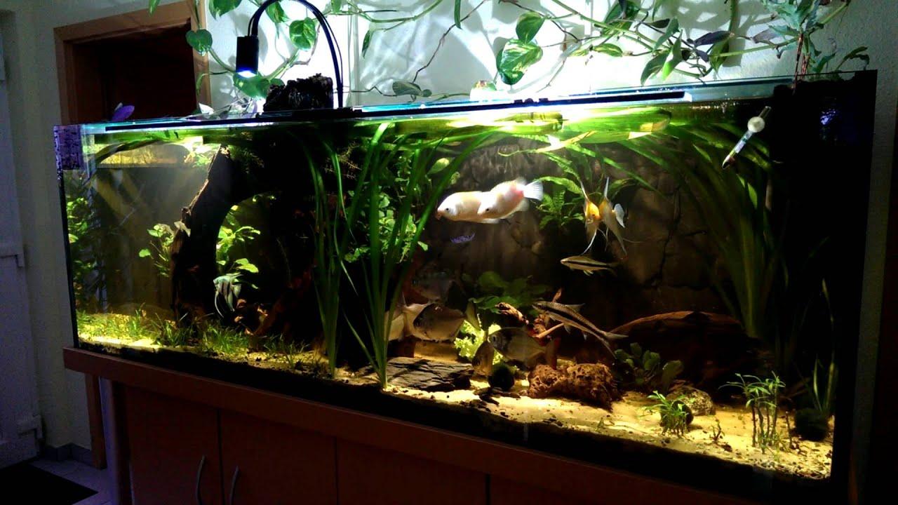 Kessil A150W Amazon Sun LED-Mein Aquarium - YouTube