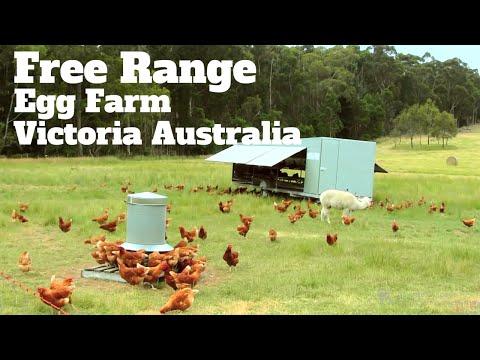 Pastured Egg farming Victoria Australia