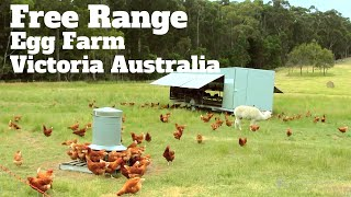 Free Range Egg Farming Victoria Australia