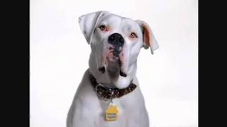 Microchip Commercial For Dogs By Home Again