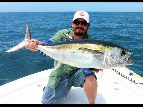 King Mackerel And Blackfin Tuna - Offshore Tampa Bay Fishing - Live Bait Trolling