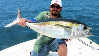 King Mackerel and Blackfin Tuna - Offshore Tampa Bay Fishing - Live Bait Trolling