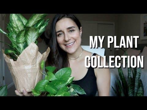 MY HOUSE PLANT COLLECTION 2018 | Esperanza Lorena
